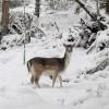 Parc Animalier d'Introd: gli animali della Valle d'Aosta visti da vicino