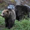 Il Parco dell'Orso Bruno