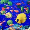 Acquario di Cala Gonone, alla scoperta del meraviglioso mondo marino