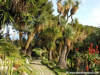 Piante Giardini Hanbury
