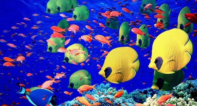 Acquario di Cala Gonone, alla scoperta del meraviglioso mondo marino ...